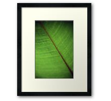 Alligator Flag Framed Print