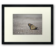 Monarch at Rest Framed Print