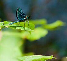 Paradise Fly by Mark Farrugia