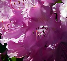 Precious and Pink by Marcia Rubin