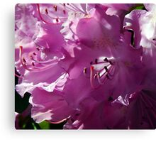 Precious and Pink Canvas Print