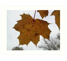 Yellow Maple Leaf Art Print