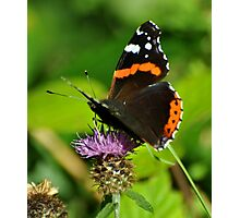 Red admiral . Photographic Print