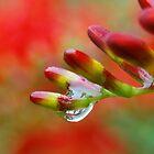 rain drop by Kyoko Beaumont