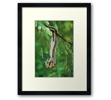 Theiving Squirrel  Framed Print
