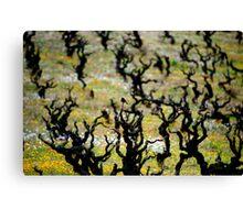 Redstart, Vineyard Canvas Print