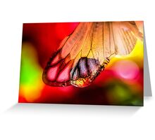 Yearning for Love and Light Greeting Card