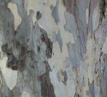 Plain Bark Provence 2 by Pontvert