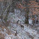 Deer At Soho by ELIZABETH B
