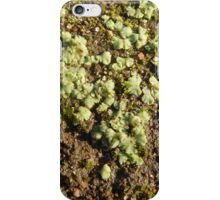 As the Frost melts on Lichens & Mosses.  iPhone Case/Skin