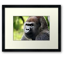 This is my Best Side!!   Gorilla Framed Print