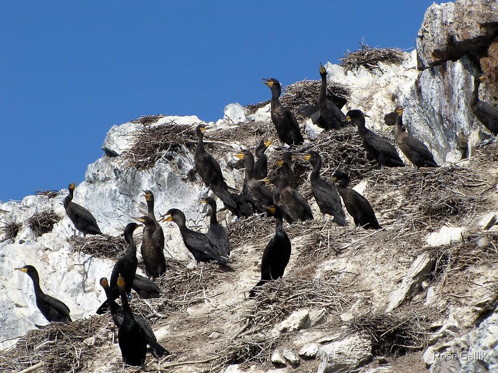 Meeting the Cormorants by Rose Gallik