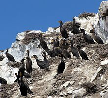 Meeting the Cormorants by Rose Gallik