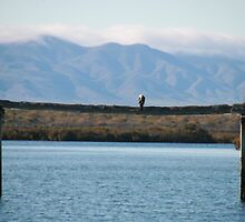 Port Augusta, eco- cruise. S.A. by elphonline