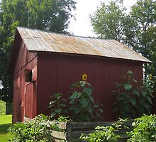 Red Hoosier Barn in Summer by here4good