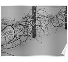 Desolate Grape Vines Poster