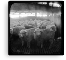 The Holding Pen - TTV Canvas Print
