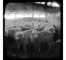 The Holding Pen - TTV Photographic Print