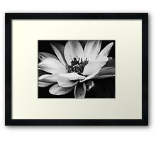 Dahlia in bloom III Framed Print