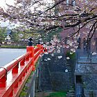 Blossoms Over Bridge by Caprice Sobels