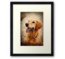 Fetch on the beach Framed Print