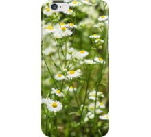 Herbs on the lawn - small white camomile flowers iPhone Case/Skin