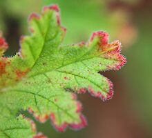 Winter Geranium Leaf by Susan Brown