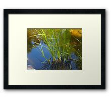 Water reeds growing out of the water Framed Print