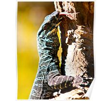 Chantilly ... the male lizard Poster