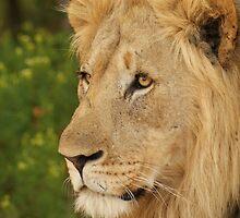 King of the Bush by Tara Pirie