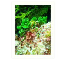Coral at Rottnest,WA Art Print