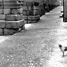 Segovian street cat by Gili Orr
