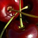Stems From Cherries Three by paintingsheep