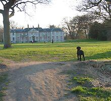 A walk round the Estate by Annie Begg