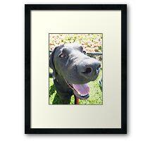 Hello....! Framed Print