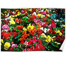 Flower Colours Poster
