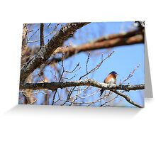 Spring Blue Greeting Card