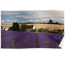 Lavender Lines Poster