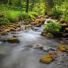 Swiss Glade. by Dave Hare