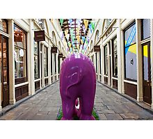 London elephant, Covent Garden Photographic Print