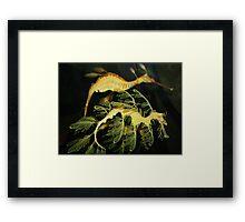 Sea Dragons Framed Print