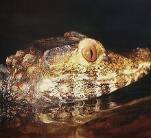 Baby Alligator by Paulette1021
