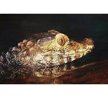 Baby Alligator Photographic Print