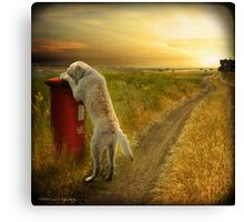 Take out the Mail, Molly...Good Dog Canvas Print