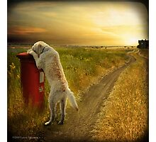 Take out the Mail, Molly...Good Dog Photographic Print