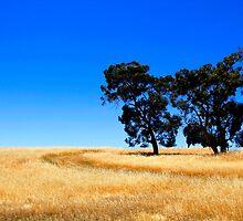 Australian Rural Landscape by John Wallace