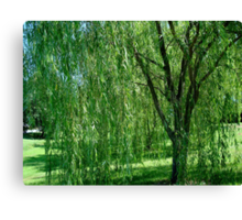 Under the Old Willow Tree- collaboration Canvas Print