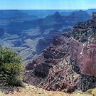 North Rim - Grand Canyon by Terence Russell