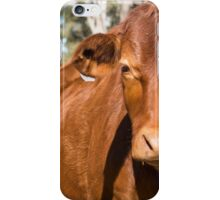 Cow in the paddock  iPhone Case/Skin