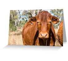 Cow in the paddock  Greeting Card